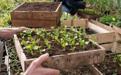 Projectoproep Good Food Professionele landbouw 2019: de korte keten
