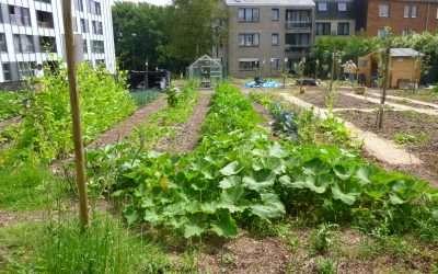 Un nouveau dossier Agriculture urbaine dans le Guide Bâtiment durable
