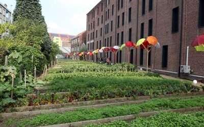 Comment intégrer l'agriculture urbaine professionnelle sur votre territoire ? – Visites de projets pleine terre