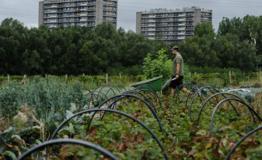 Landbouwtestplaats in Anderlecht