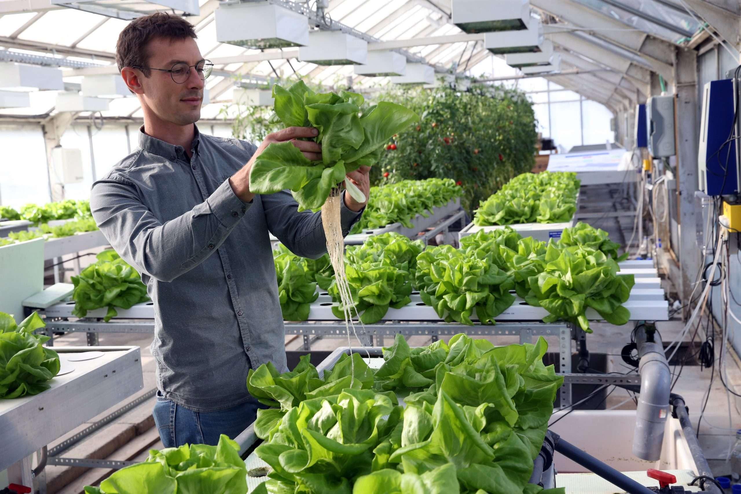 Une plateforme de recherche sur l'agriculture urbaine – WASABI