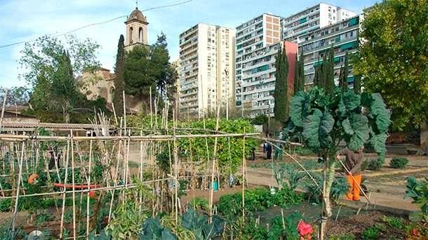 Une fédération est née pour représenter l'agriculture urbaine professionnelle à Bruxelles !