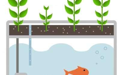 Smart Aquaponics – Webinaire et visite de systèmes aquaponiques