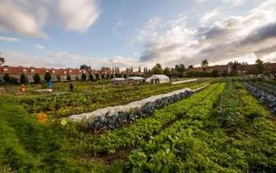 De boerderij Kwartelzang, een Brussels experiment dat stedelijke functies verrijkt