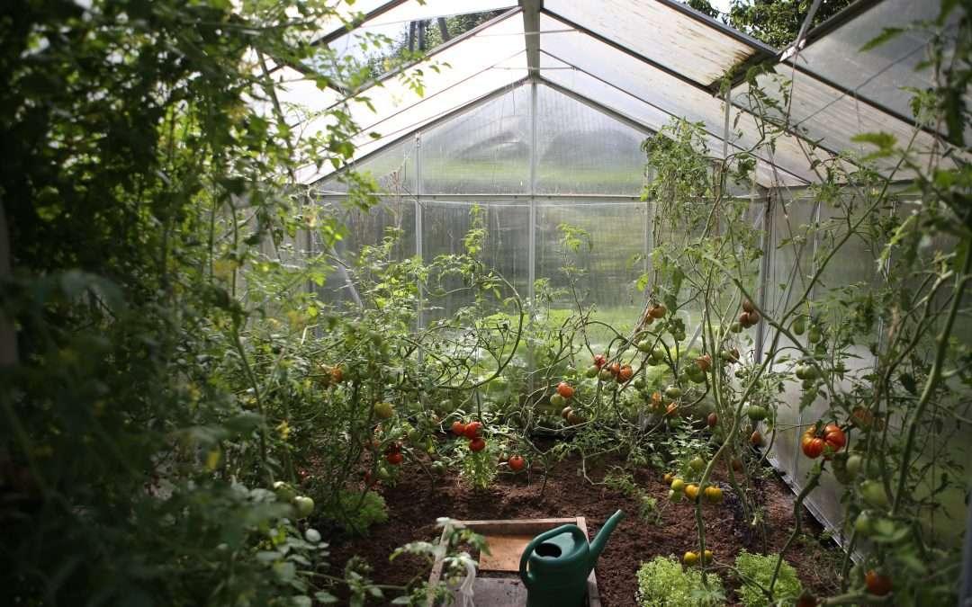 Une formation en agriculture urbaine et bâtiment durable