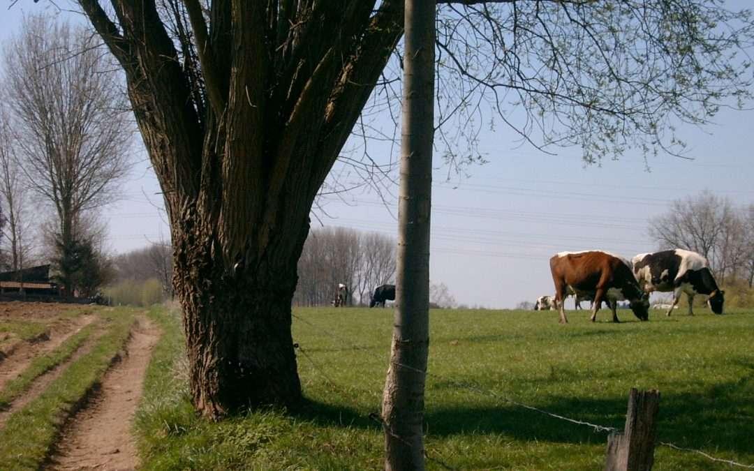 Le PRAS en révision pour que l'agriculture trouve sa place à Bruxelles