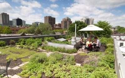 Stadslandbouw op daken: terugkoppeling van ervaringen en aandachtspunten